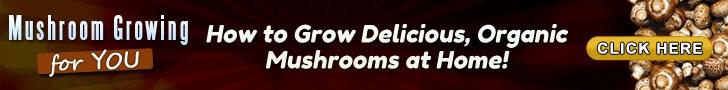 Mushroom Growing for You