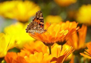 4 Ways to Attract Pollinators To Your Organic Vegetable Garden
